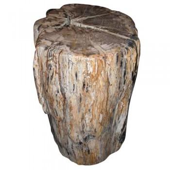 Bloc de bois pétrifié poli. Indonésie douze millions d'années.